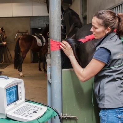 VLS-Paardenpraktijk - Voortplanting en merriebegeleiding