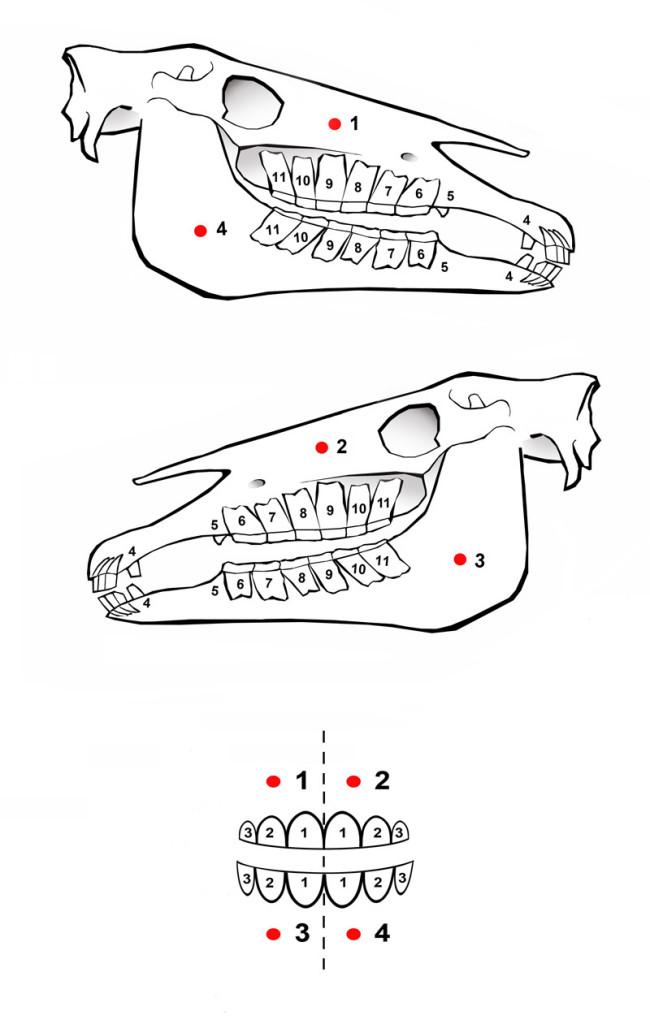 Tekening-schedel